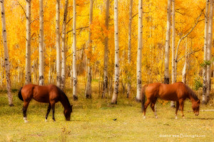 Two Horses in the Colorado Fall Foliage